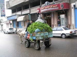 Donkey cart piled high in a Gaza street
